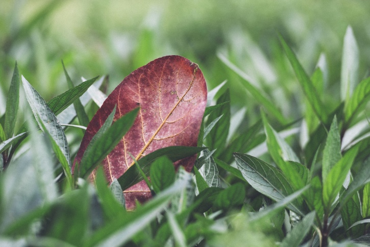zelená tráva, list, listí, vegetace
