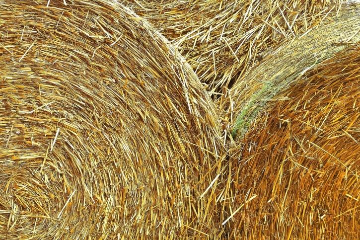 siano, okrągły, bele słomy, rolnictwo, uprawy