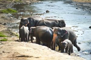 слон, Африка, околна среда, семейството, стадо, животни, гръбначни