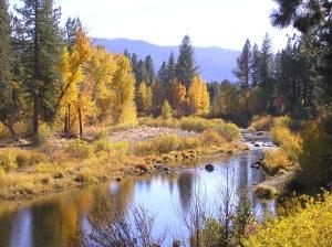 folyó, sziklák, táj, a nyári szezonban, utazás, fák, víz, fa