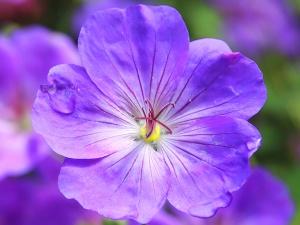 植物、花、マクロ、花、花、植物