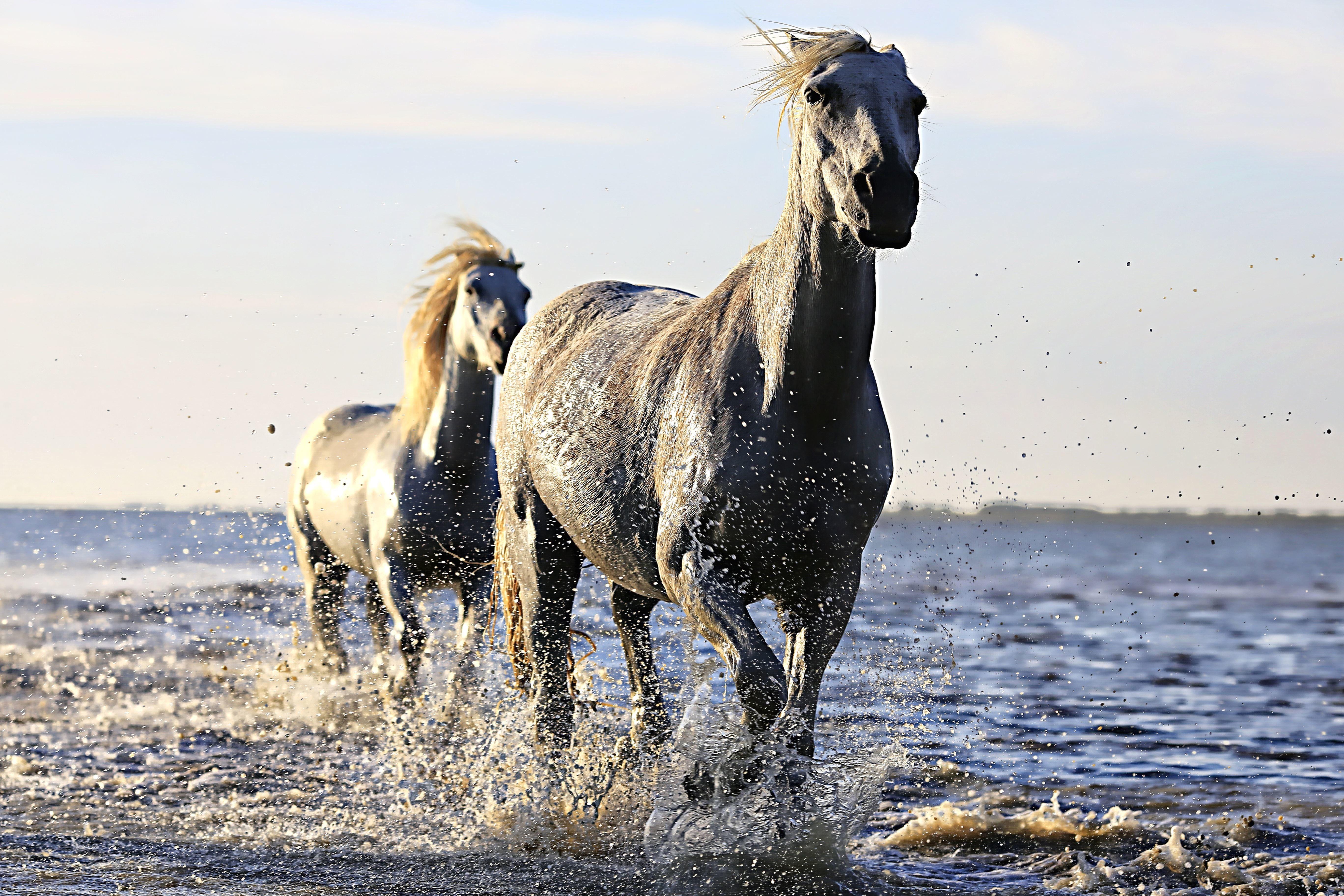 выпуска, дикая лошадь картинка знаменитой картине ноэ