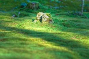 jardín, hierba, verde, escultura, estatua, piedra