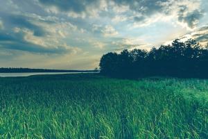 hemel, zomer, zonsondergang, bomen, water, veld, gras