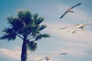 birds, palm tree, sky, tree, tropical
