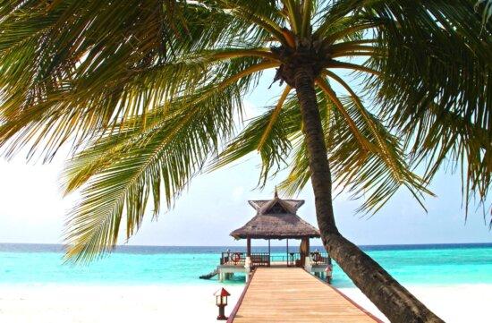 海、夏、太陽の下、トロピカルなビーチ、美しい