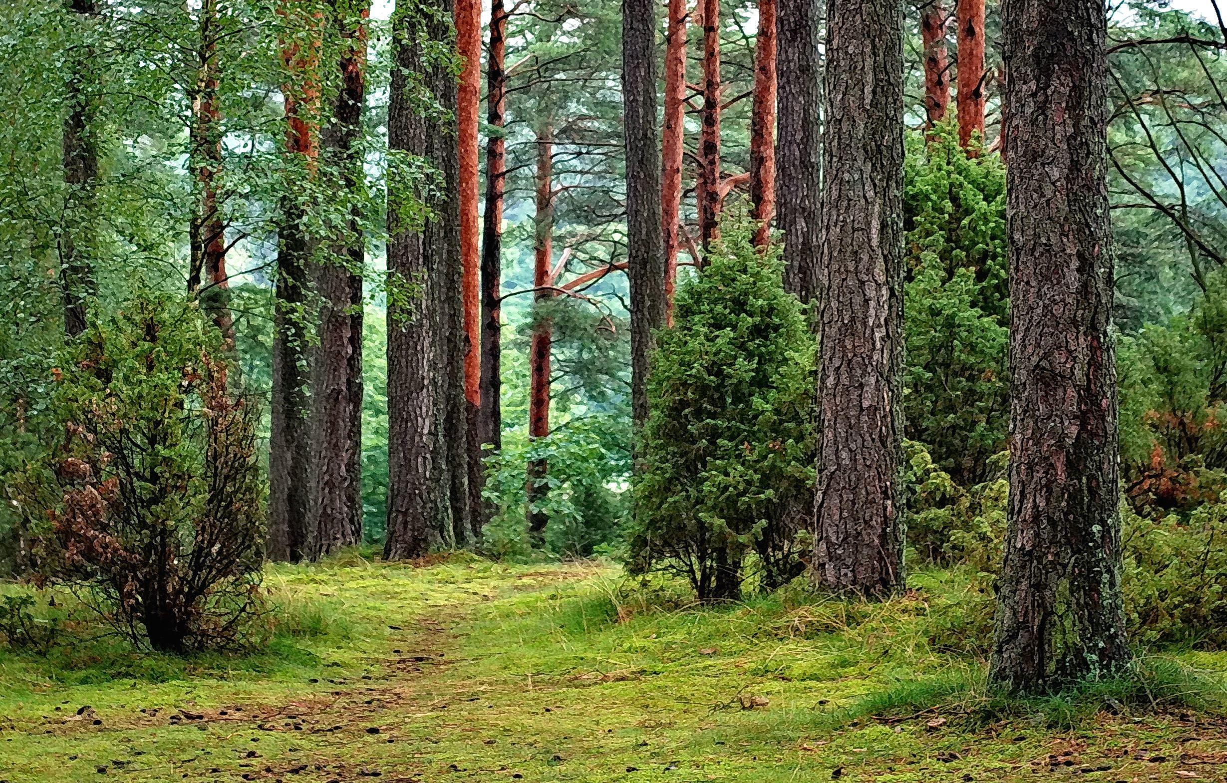 Image Libre  Tronc D U0026 39 Arbre  Le Bois  L U0026 39 Environnement  La