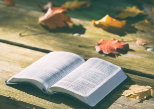 pages, bench, bible, book, dry leaves, knowledge