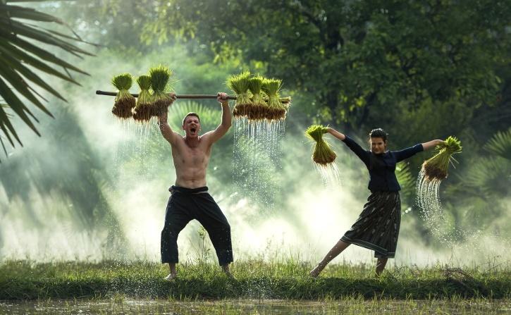 ชาวนา คน เขตข้อมูล หญ้า เก็บเกี่ยว แรงงาน พืช ชนบท น้ำ