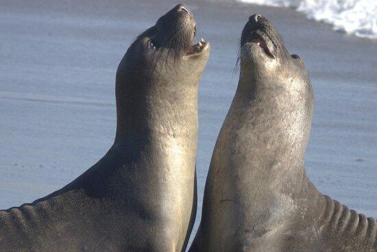 sea lions, water, wildlife, animals, beach, ocean