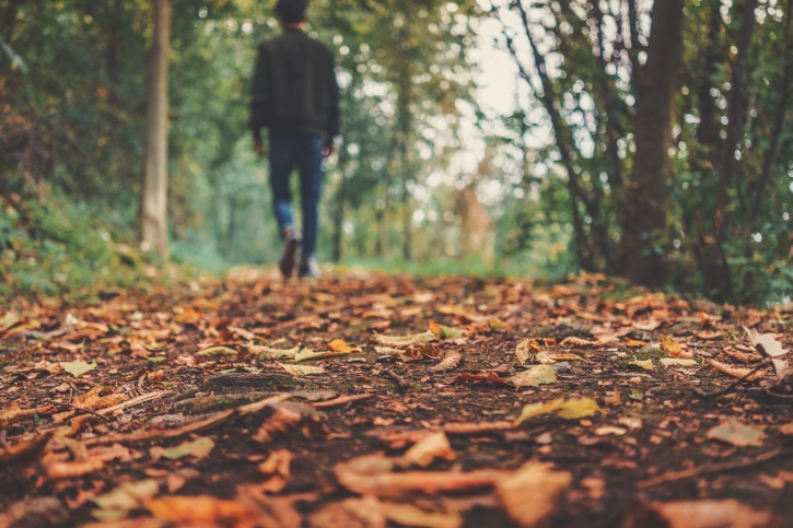person, trees, autumn, ground, leaves, man
