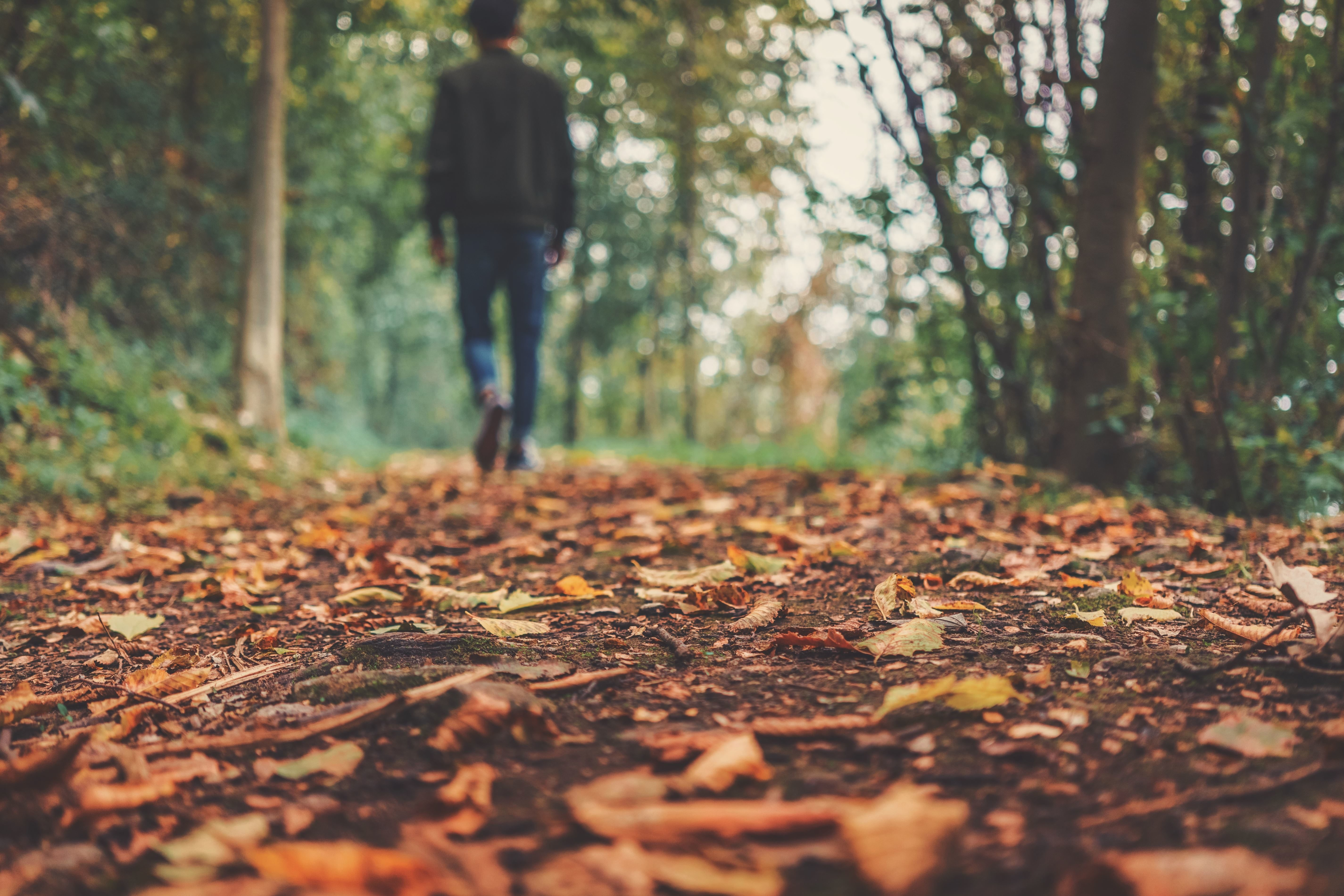 Free Picture Person Trees Autumn Ground Leaves Man