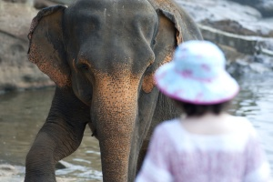 Tier, Elefant, Fauna, Fluss