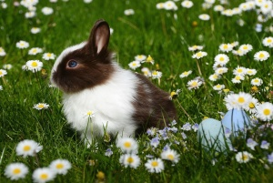 pet, rabbit, animal, chamomile, bunny, field, flowers