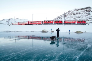 daylight, dog, explore, frozen, lake, ice, train, travel, trip, winter