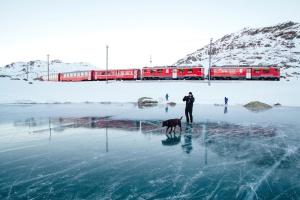 luz do dia, cão, explorar, congelado, lago, gelo, trem, viagem, viagem, inverno
