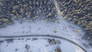 tree, weather, winter, snow, snowy, travel, forest, frost, cars, cold