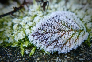 snow, winter, bright, frost, garden, green, ice