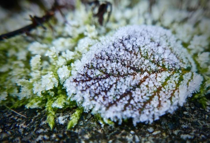 talvi, kirkas, pakkasen, lumen, jään, Internet, vihreä