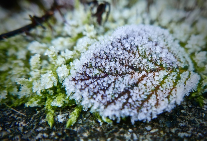 snow, winter, bright, frost, garden, green, ice