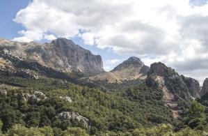 Rock, fjell, tree, fjell, natur, himmelen