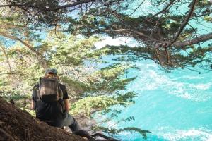 mann, fjell, eventyr, ryggsekk, natur, reiser, trær