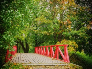 tree, wood, bridge, red