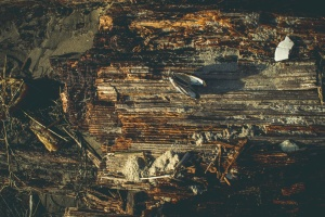wooden plank, old, wood, texture, shell