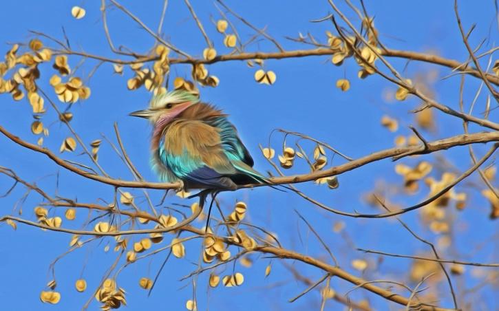 ptica, perje, prirode, divlje životinje, životinja, drvo, nebo