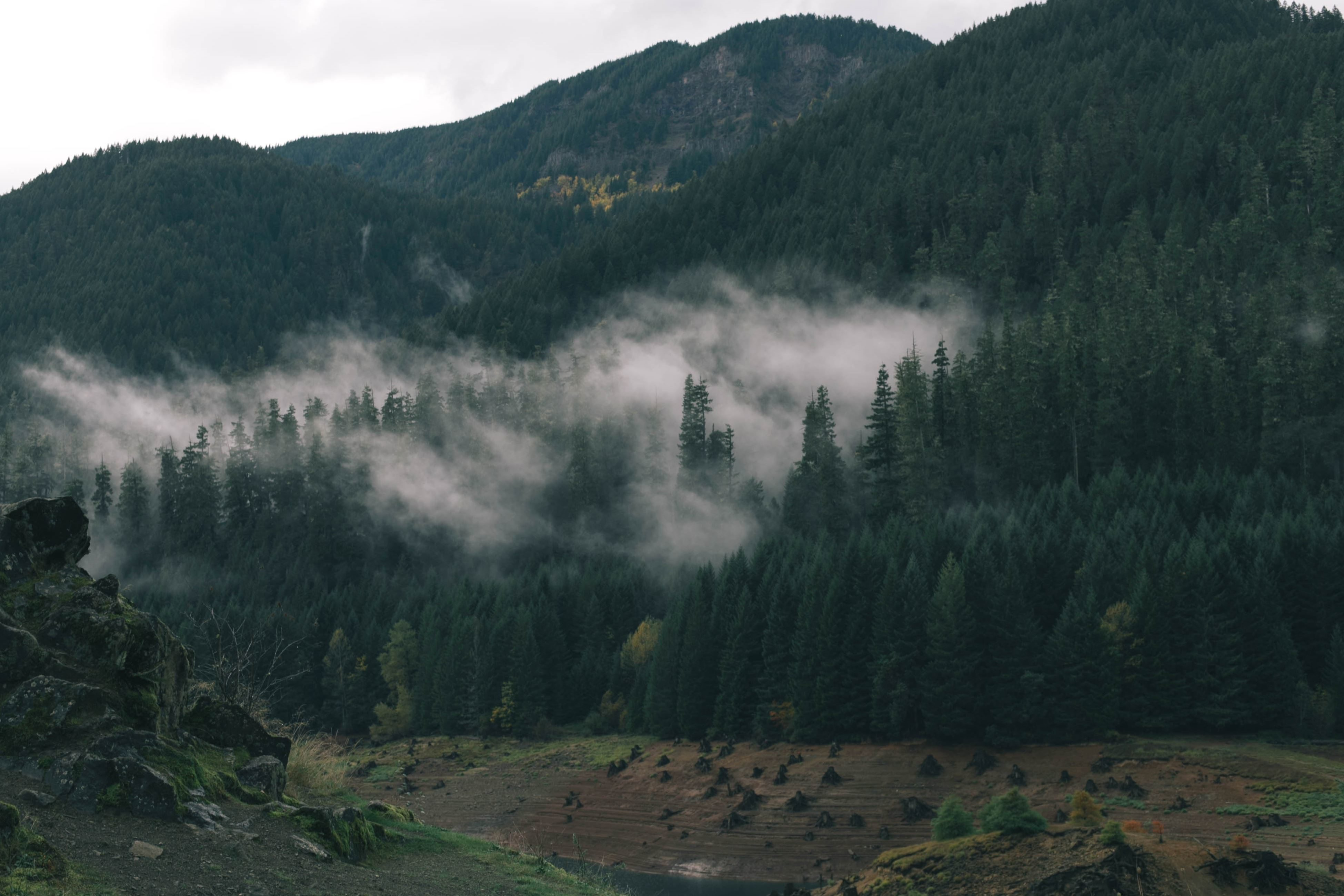 Free picture: mountain, mist, mountains, nature, tree, fog ...