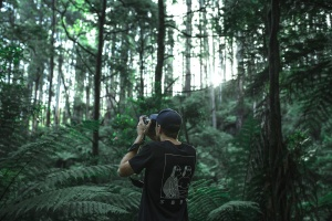 vegetation, photo camera, foliage, forest, man, nature, photographer, tree