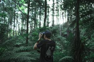 vegetatie, fotocamera, gebladerte, bos, mens, natuur, fotograaf, boom