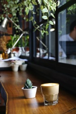 cactus, plant, coffee cup, daylight, drink, table, tableware, window, wood