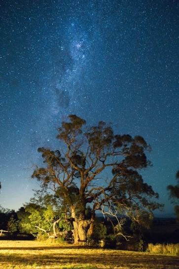niebo, wszechświat, gwiazdy, drzewa, galaxy, noc