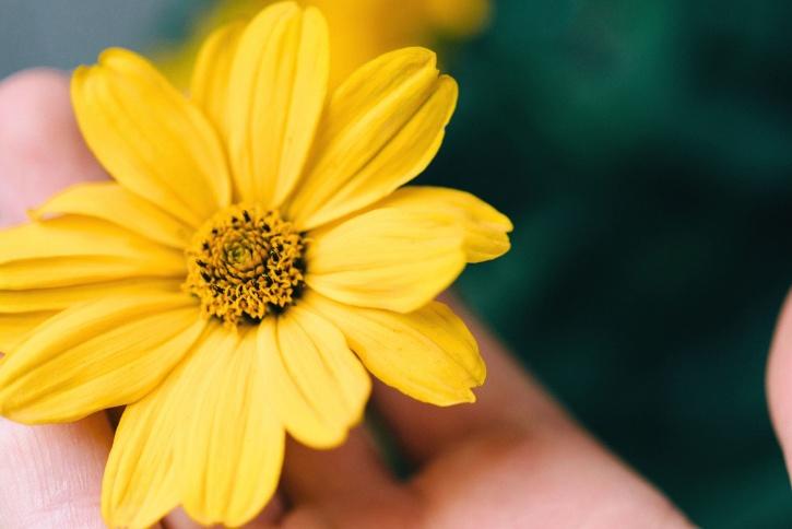 nature, petals, bloom, blossom, flora, flower