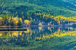 reflectie, boom, dok, bos, natuur, lake
