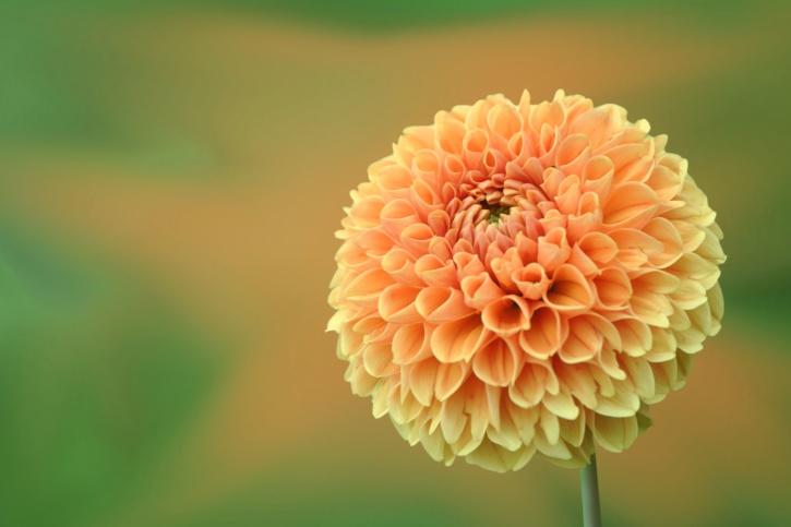 nature, petals, plant, season, summer, flora, flower, garden