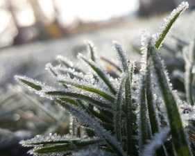 frost, green leaves, snow, frozen, grass, macro, nature, winter