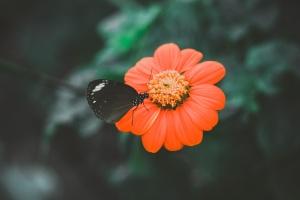 flora, flower, garden, insect, petals, pollen