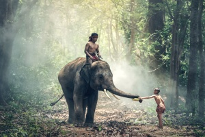 elephant, people, forest, sunlight, travel, tree