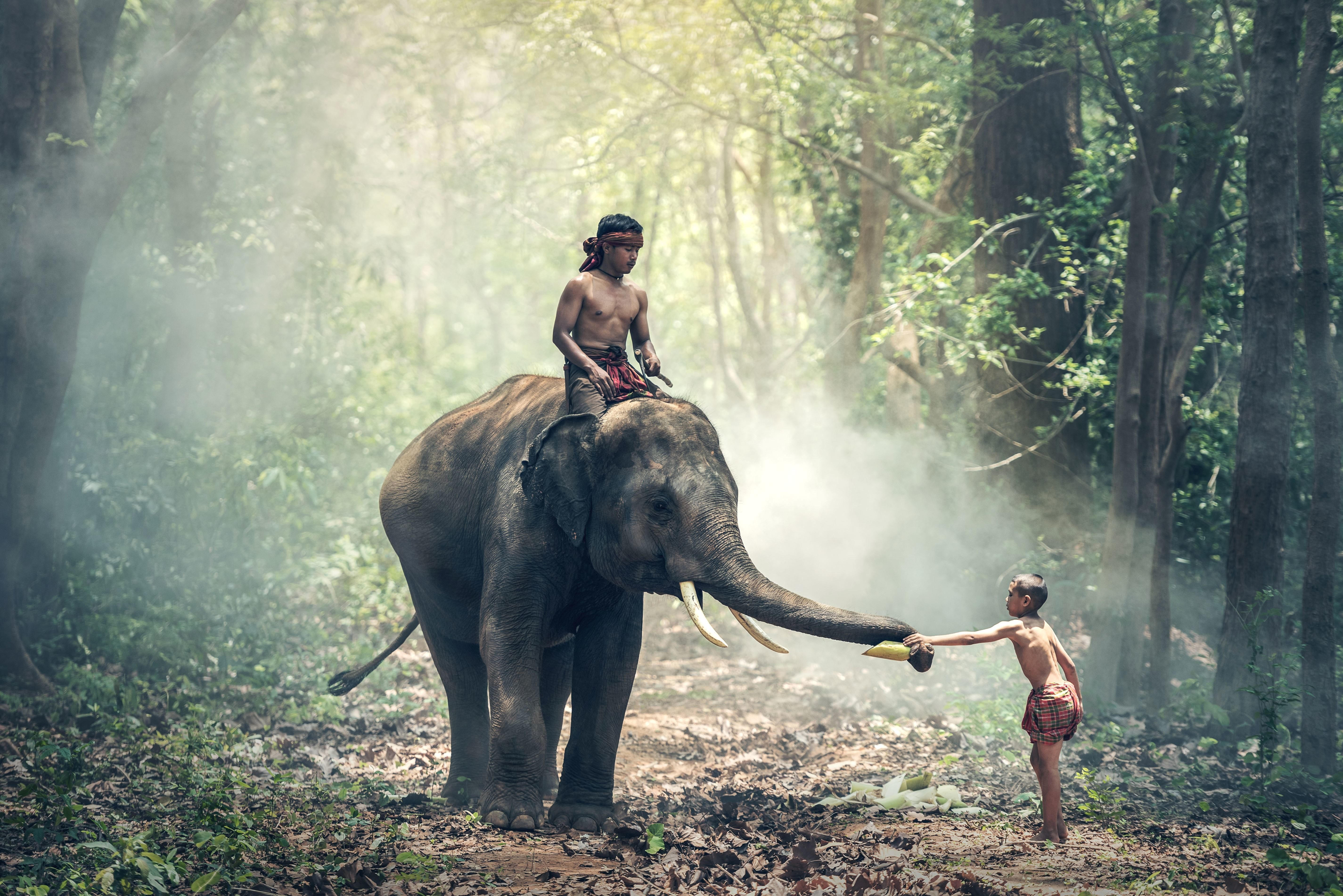 Free Picture Elephant People Forest Sunlight Travel Tree