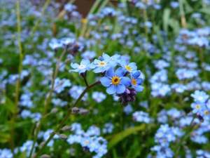 nature, petals, bloom, blossom, flora, flowers
