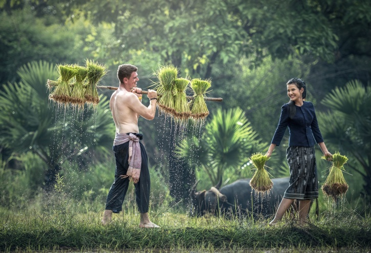 Γεωργία, ασια, εξοχή, καλλιεργούν, Πολιτισμός, αγρόκτημα, αγρότης