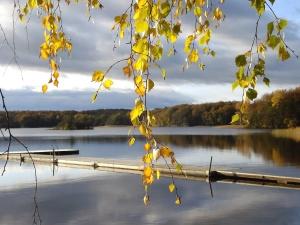 muelle, ambiente, bosque, otoño, rama, brillante, nubes