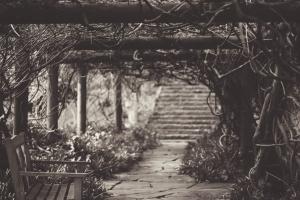 gamle, trapper, træ, bænk, trappe