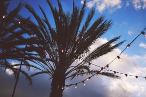 palm tree, silhouette, string, lights, sky