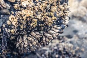 dirt, rock, shells, stone, surface, texture
