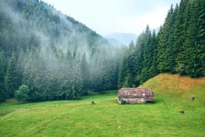 Bauernhof, Nebel, Wald, Wiese, Kiefer, Aufforstung, Tiere, Kühe