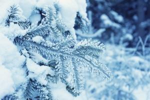 snowflake, cold, frozen, ice, pine tree, winter