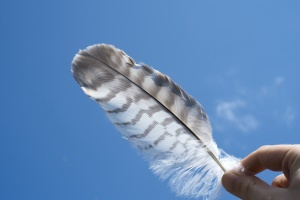 fingers, hand, blue sky, feather